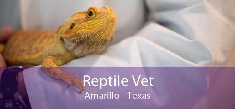 Reptile Vet Amarillo - Texas