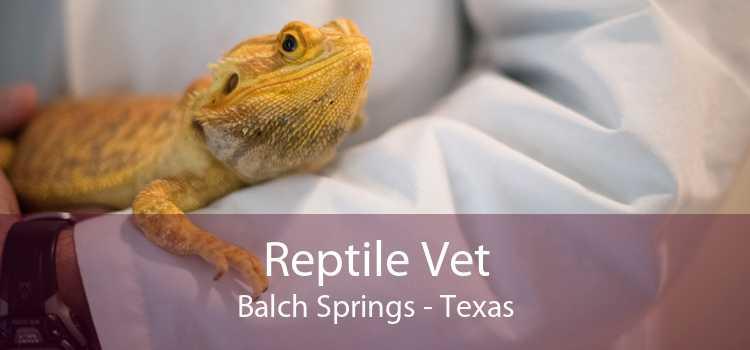 Reptile Vet Balch Springs - Texas