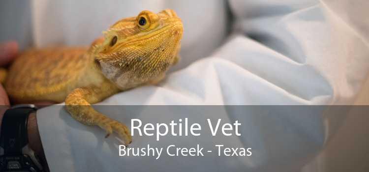 Reptile Vet Brushy Creek - Texas