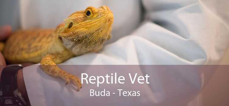 Reptile Vet Buda - Texas