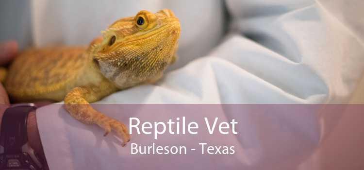 Reptile Vet Burleson - Texas