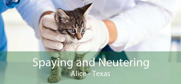 Spaying and Neutering Alice - Texas
