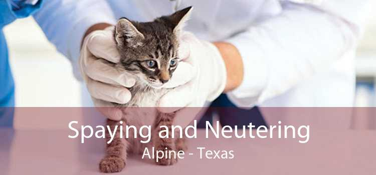 Spaying and Neutering Alpine - Texas