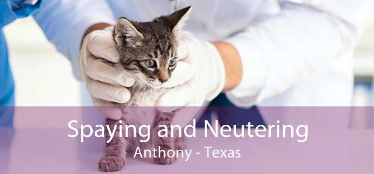 Spaying and Neutering Anthony - Texas