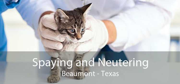 Spaying and Neutering Beaumont - Texas