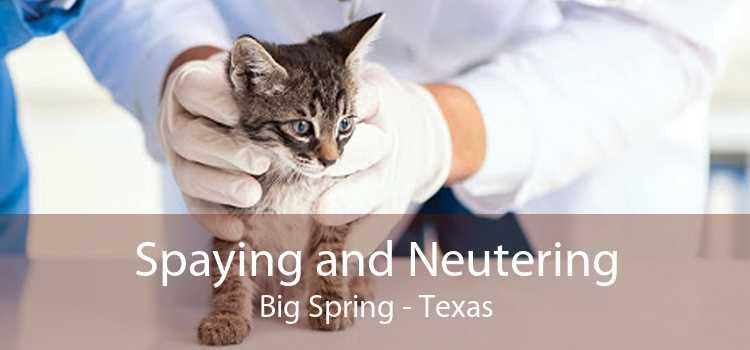 Spaying and Neutering Big Spring - Texas