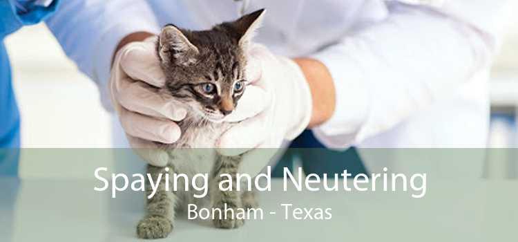 Spaying and Neutering Bonham - Texas