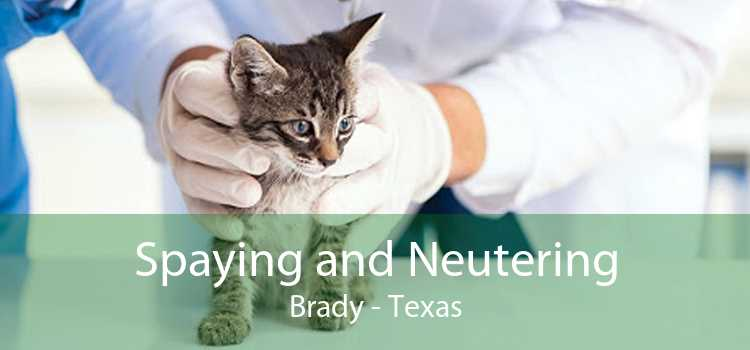 Spaying and Neutering Brady - Texas
