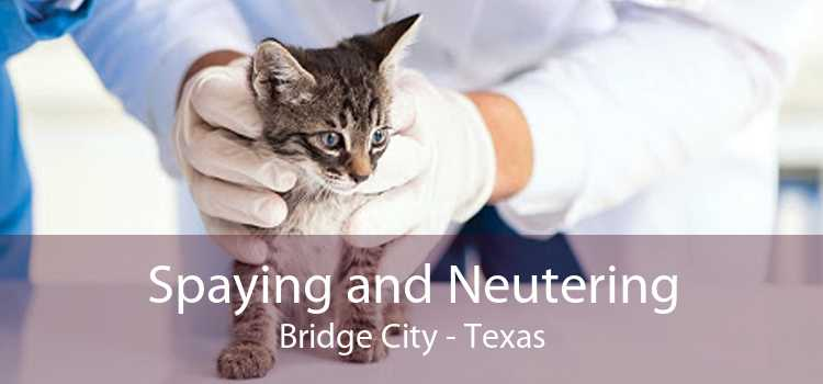 Spaying and Neutering Bridge City - Texas