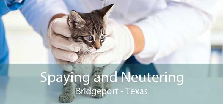 Spaying and Neutering Bridgeport - Texas
