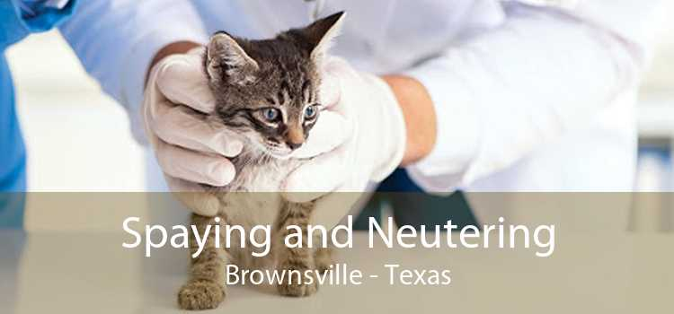 Spaying and Neutering Brownsville - Texas