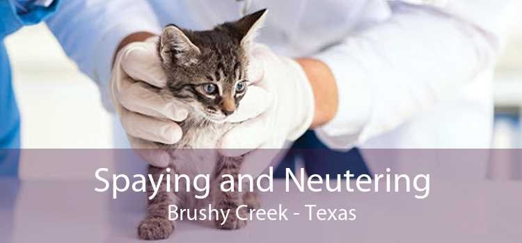 Spaying and Neutering Brushy Creek - Texas