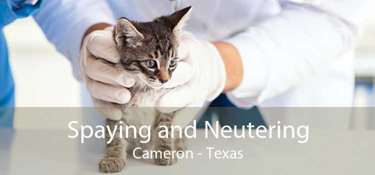 Spaying and Neutering Cameron - Texas