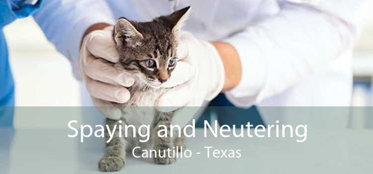 Spaying and Neutering Canutillo - Texas