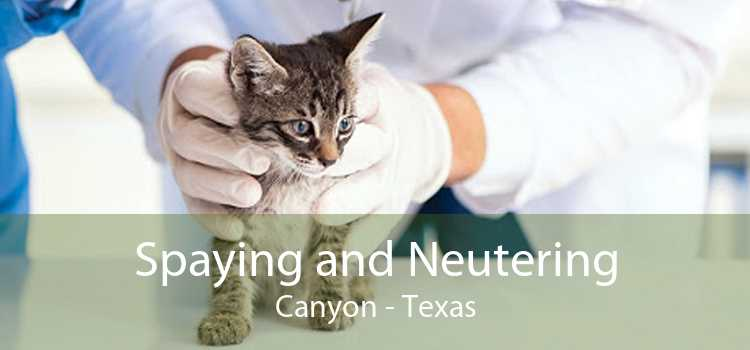 Spaying and Neutering Canyon - Texas
