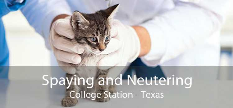 Spaying and Neutering College Station - Texas