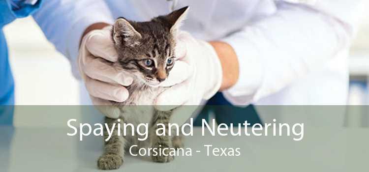Spaying and Neutering Corsicana - Texas