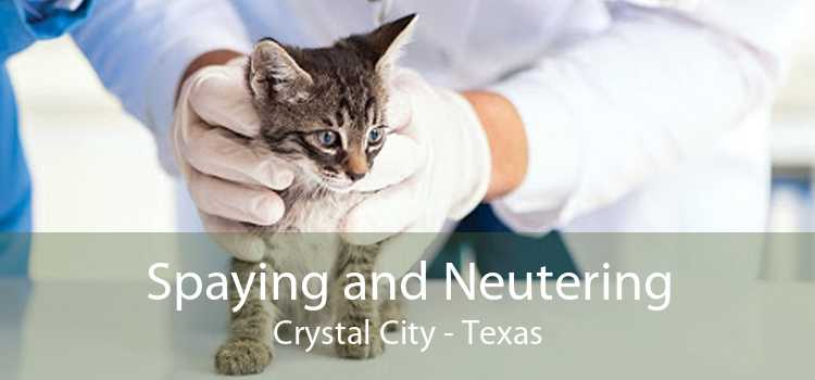 Spaying and Neutering Crystal City - Texas