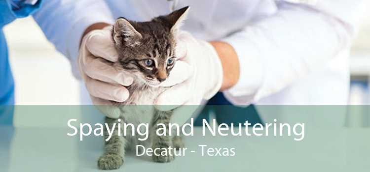 Spaying and Neutering Decatur - Texas