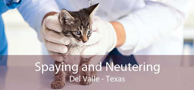 Spaying and Neutering Del Valle - Texas