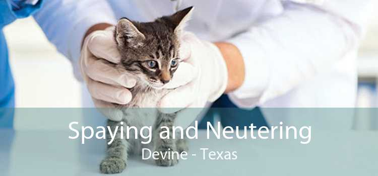 Spaying and Neutering Devine - Texas