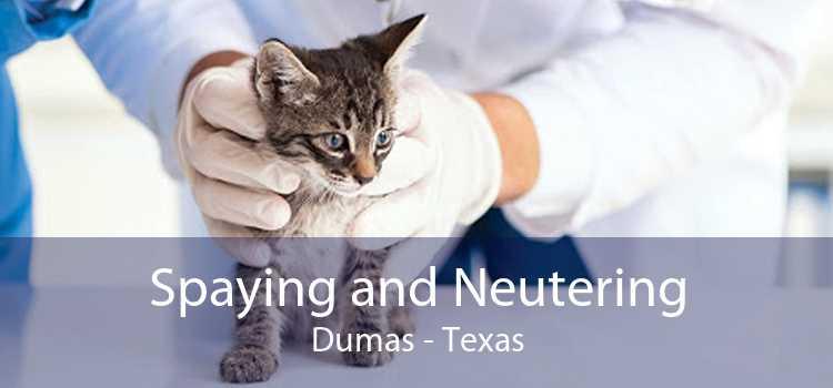 Spaying and Neutering Dumas - Texas