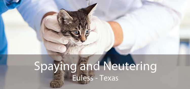 Spaying and Neutering Euless - Texas