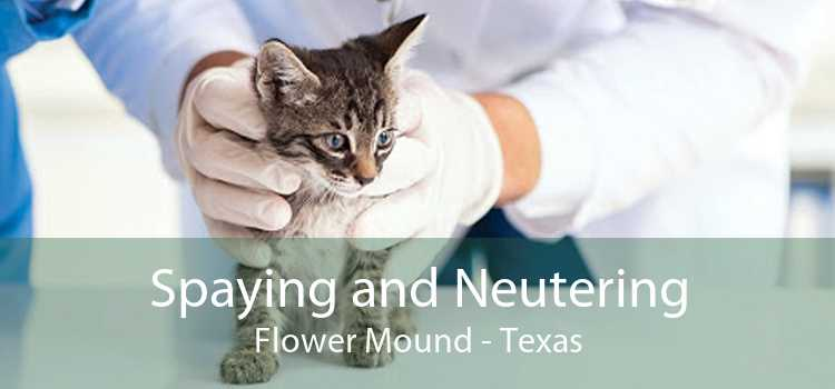 Spaying and Neutering Flower Mound - Texas