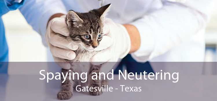 Spaying and Neutering Gatesville - Texas