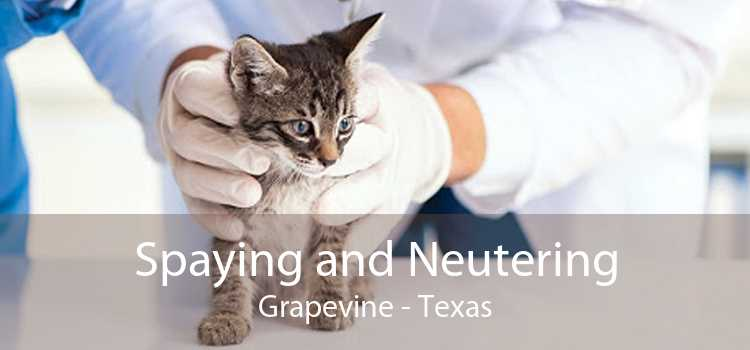 Spaying and Neutering Grapevine - Texas