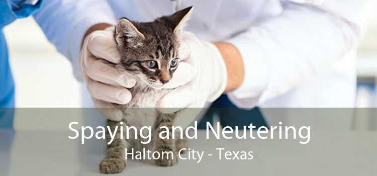 Spaying and Neutering Haltom City - Texas