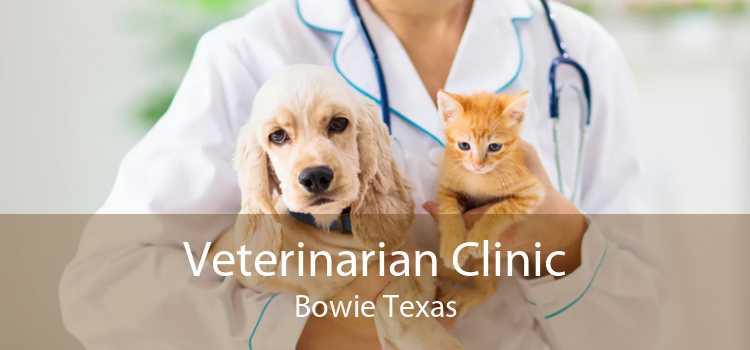 Veterinarian Clinic Bowie Texas