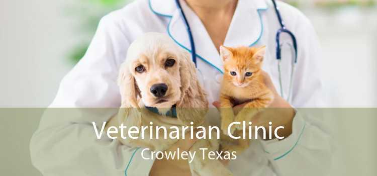 Veterinarian Clinic Crowley Texas